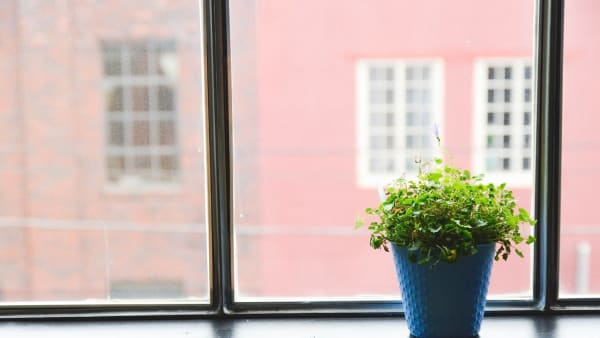 Plant on an indoor window sill.